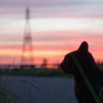 沖昌之 ネコ写真家のきっかけの猫とは?美しさとネコ画像5選!【天才!志村どうぶつ園】